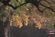 vlcsnap-2018-10-23-10h16m26s221